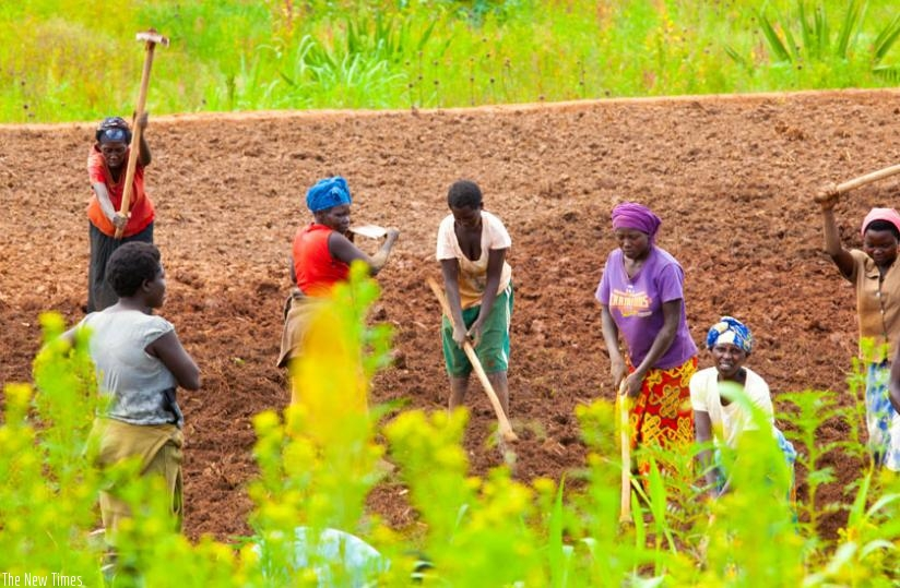 Farmers in Ruryaraya Sector in Rwamagana District tilling their land. Rwanda currently has around 1.5 million hectares of arable land, most of which is either in use for commercial or subsistence farming. (File)
