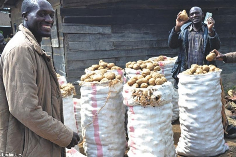 Irish potato farming presents Rwanda a big opportunity to achieve some of its industrialisation objectives. / File.