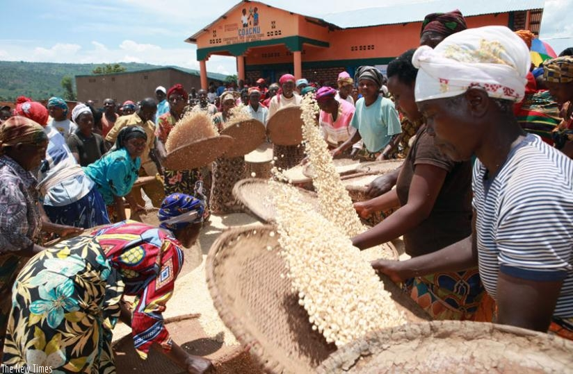 Maize farmers in Kirehe District during post harvest handling. (File)