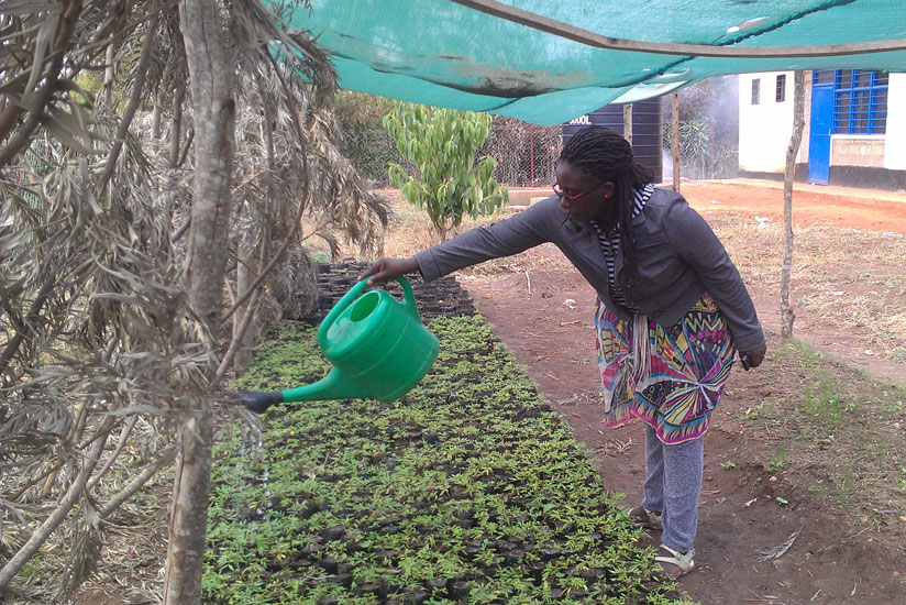 Caritas Uwitonze, a teacher at GS St Vincent de Paul Rwamagana Catholique, irrigates seedlings at the school tree nurseries. / Frederic Byumvuhore