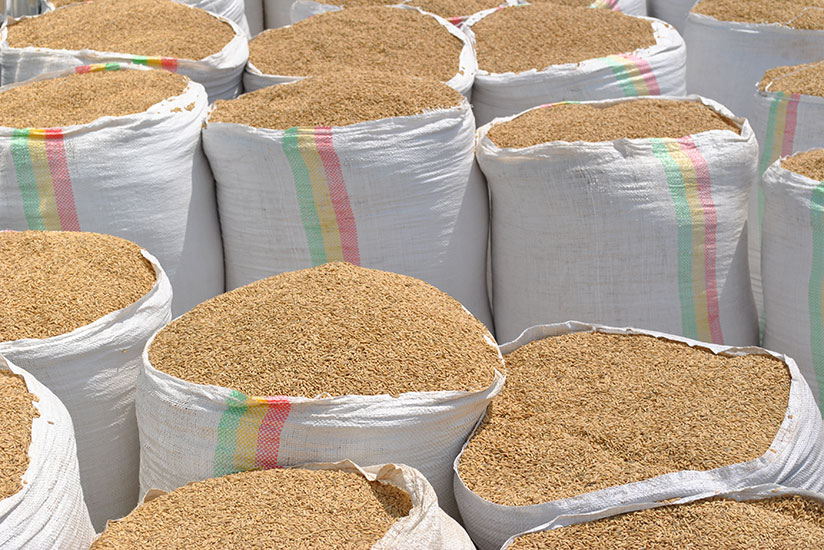 Proper grain and cereal storage is crucial to reduce losses and ensure food safety. / File