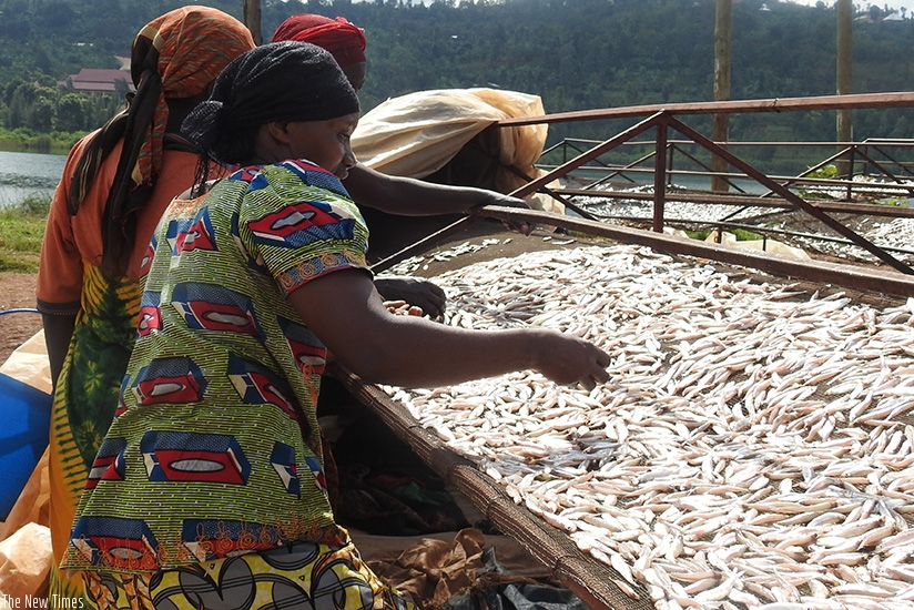 Cooperative members drying silver fish. / Frederic Byumvuhore.