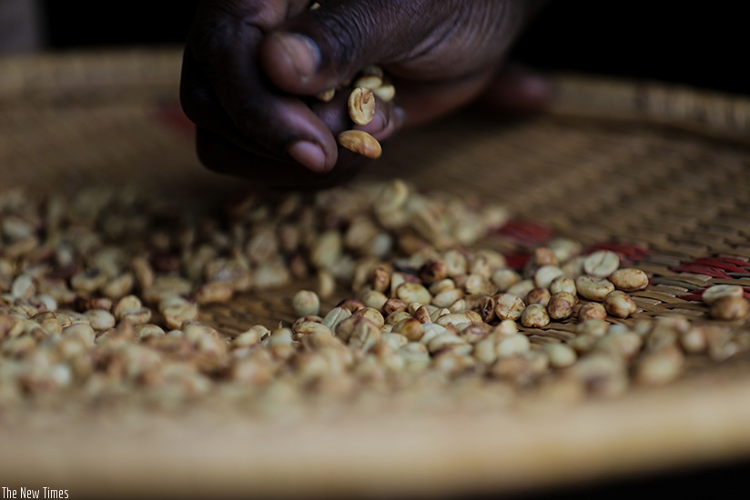 A farmer sorts out coffee beans in Kayonza. The government has reviewed eligibility for the Export Growth Facility to benefit export oriented SMEs. Timothy Kisambira.