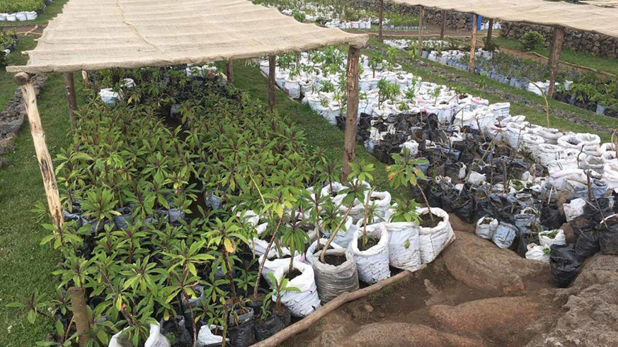 Singita has established an on-site nursery that already holds more than 60,000 plants. Courtesy