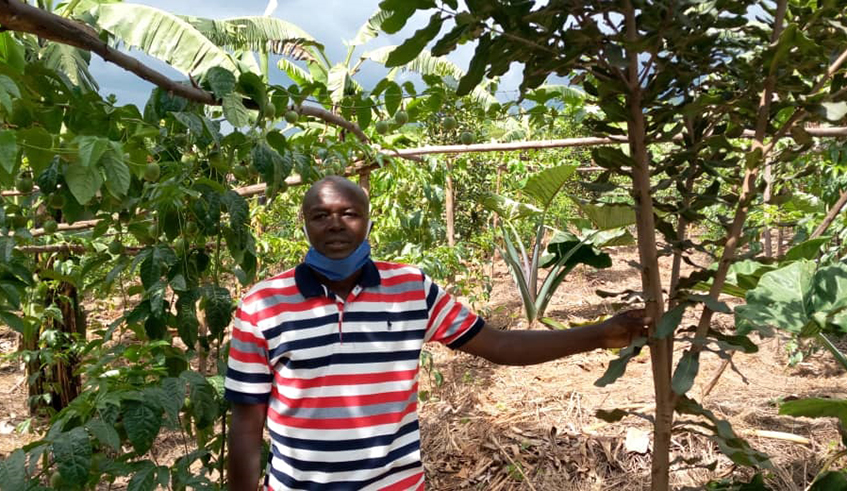 Speraton Ntawumenyumunsi, a farmer in the area, has more than 10 hectares of coffee, banana, macadamia, passion fruits, tamarillos and pineapples among others. Photo: Jean de Dieu Nsabimana.Speraton Ntawumenyumunsi, a farmer in the area has more than 10 hectares of coffee, banana, macadamia, passion fruits, tamarillos and pineapples among others. / Photo: Jean de Dieu Nsabimana.