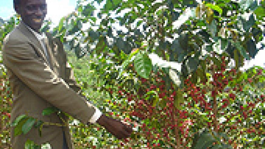 Coffee is one of the main cash crops sub-Saharan Africa depends on for economic growth.