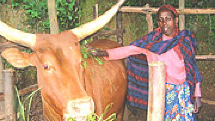 POVERTY Alleviation: A rural woman taking care of a cow. (File photo).