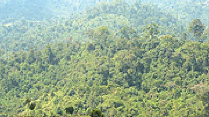 NYUNGWE FOREST: A recent expedition by a New Zealand team of explorers, claims to have reached the true source of the River Nile after travelling 6,700 kilometres in the Nyungwe forest.