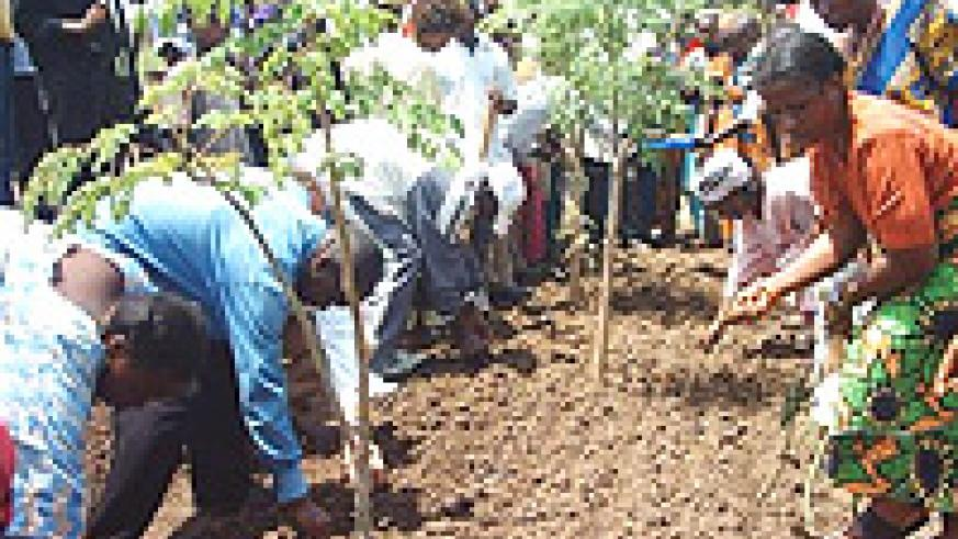 Vision 2020 in the making: Peasants involved in afforestation /reforestation. (File photo).