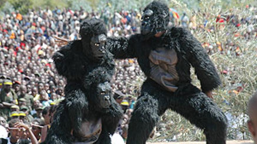 DUMMIES: Actors dressed in gorilla costumes performing at last year's Kwita Izina