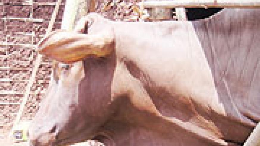 Livestock farmers were urged to practice modern animal husbandry for better yields (File photo).