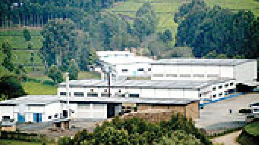 Kitabi tea  factory in Nyamagabe