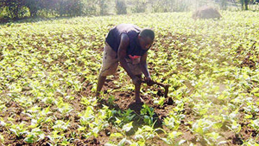 Emmanuel Mpakaniye,29, a farmer tending to his garden. (Photo: S. Rwembeho)