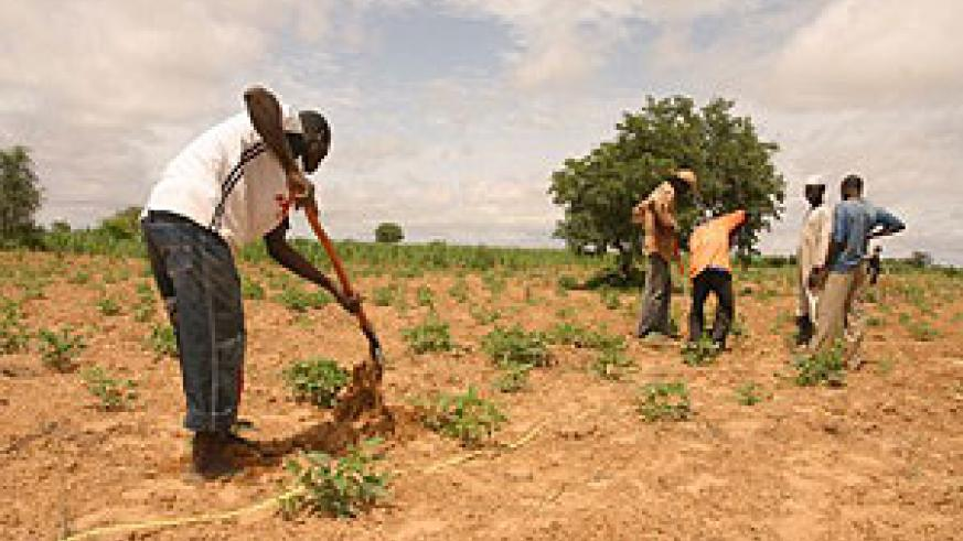 trees planted will boost the  provision of  animal feeds while also protecting the environment. (File photo)