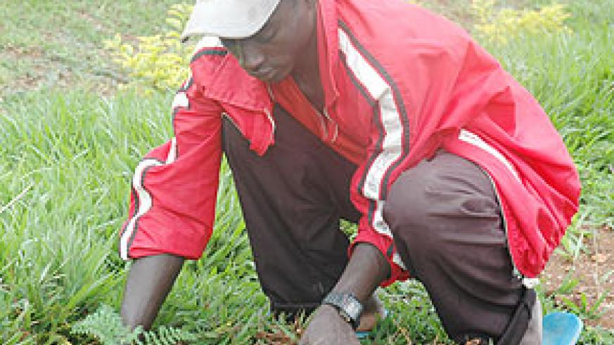 Development is directly linked to tree planting