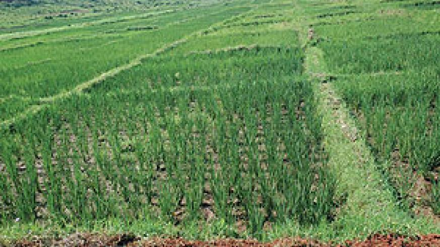 Irrigation to improve food production