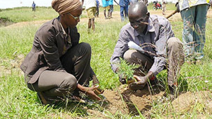 Tree Planting exercise in  Rwanda, the species should be chosen carefully.