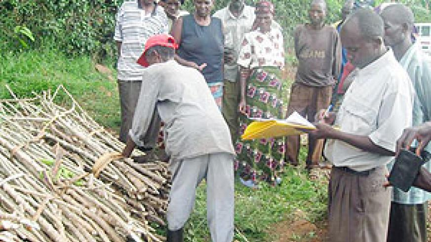 Residents of Remera recieving Cassava cuttings. (Photo: D. Ngabonziza)