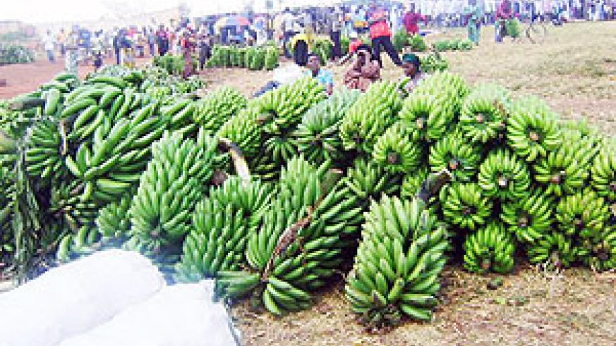 Bananas flood a local market from the cooperative.