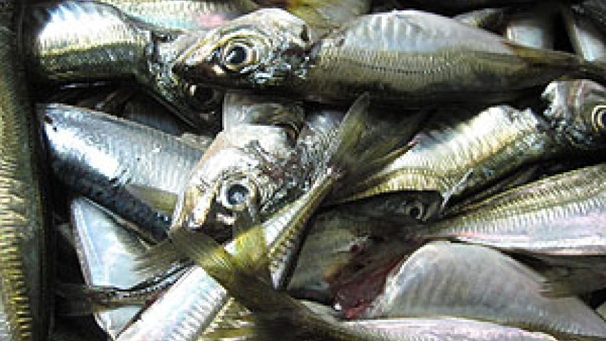 Fish business is a major income earner for many Kirehe residents. (File photo)