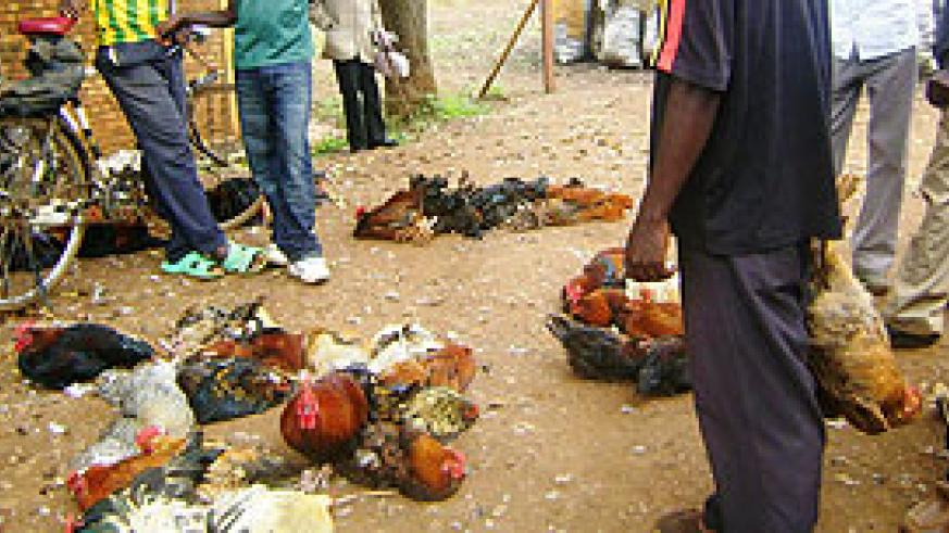 Hens suffering waiting for buyers in a local market.