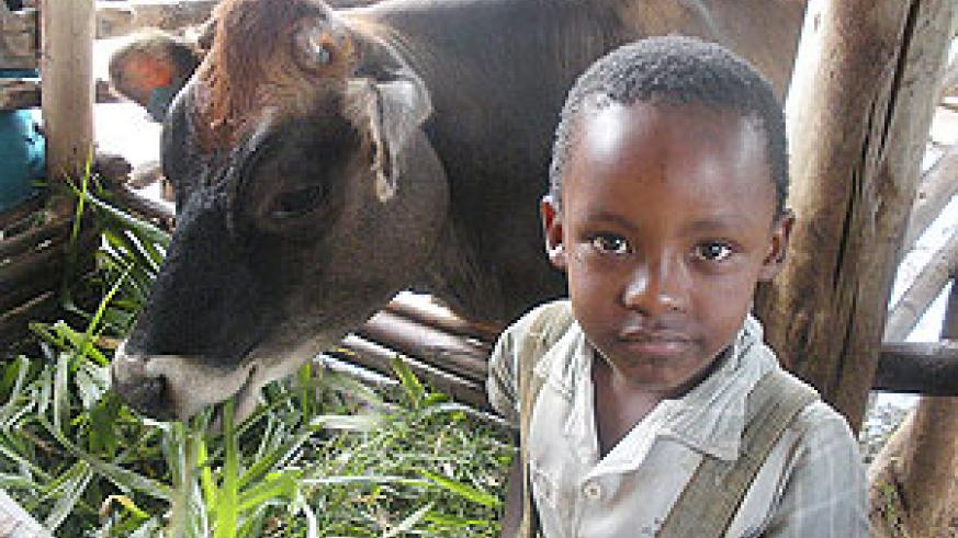 Livestock are lifting families out of poverty in rural Rwanda. (Photo by Bernard Pollack)