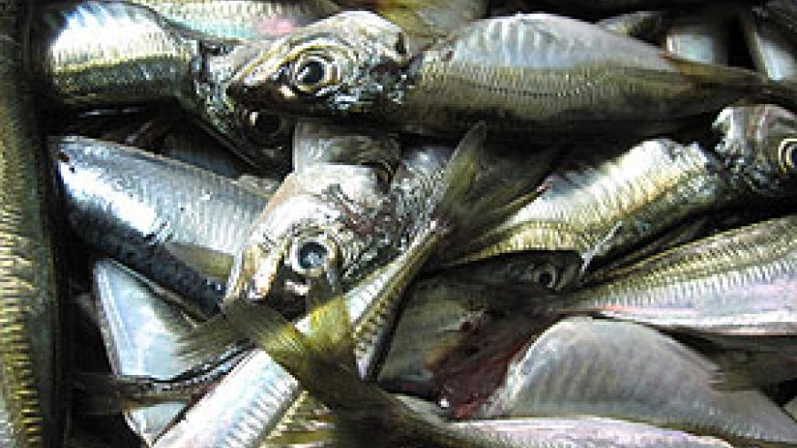 Fish ready for sale in a local market (File photo)