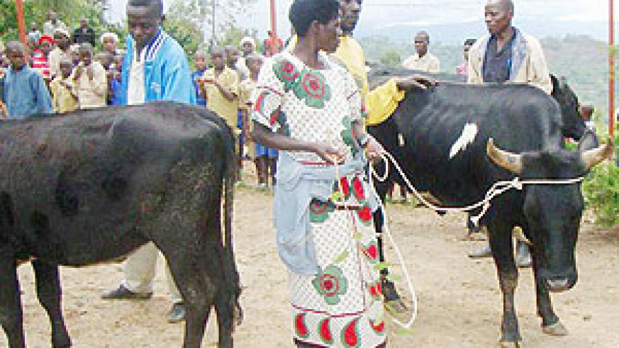 The beneficiaries recieving the cows  from the donors. (Photo: B. Mukombozi)
