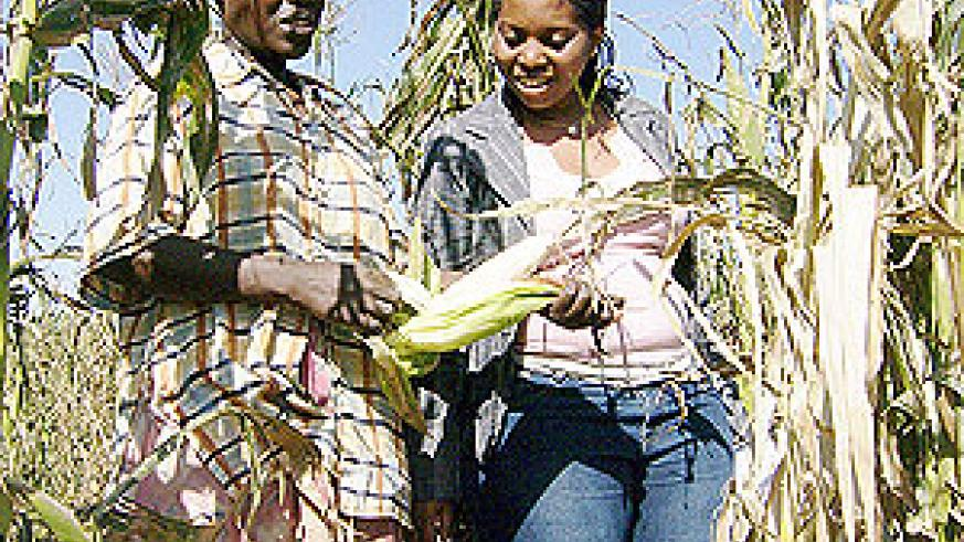 A Farmer in the company of an extension officer  inspecting a  maize field in Mahama sector.