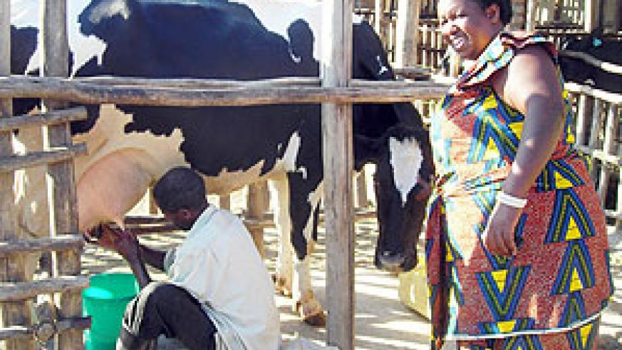 Alphonsine Mwubahamana looks on as a man milks one of her cows.(Photo / P. Ntambara)