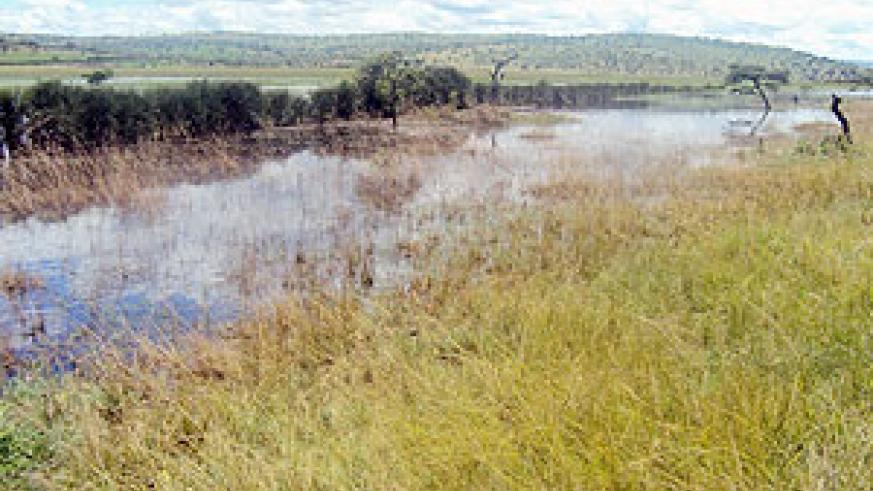 Over two kilometres of grazing lands  was submerged by floods. (Photo: D. Ngabonziza)