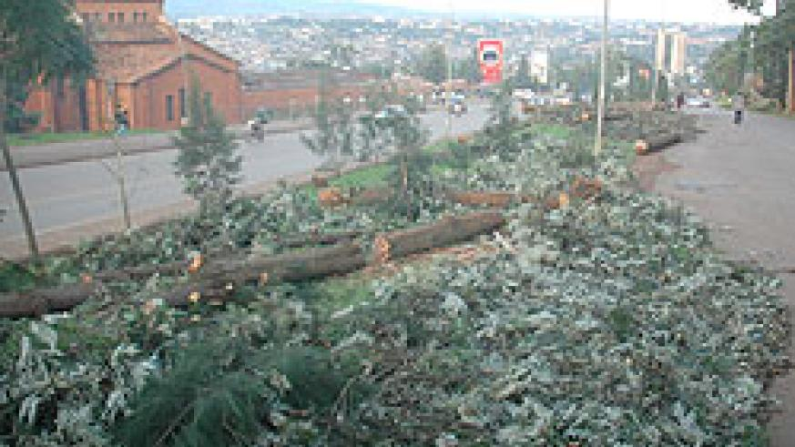 FELLED; trees along the City Centre-Peage road have been cut to pave way for the new lane (Photo F Goodman)