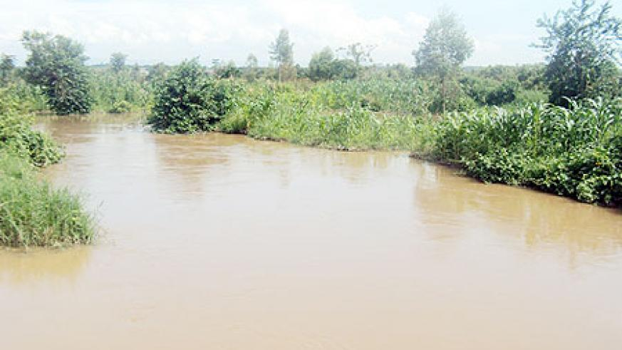 The heavy rains swept away hundreds of  hectares of maize farms.(Photo: D. Ngabonziza)