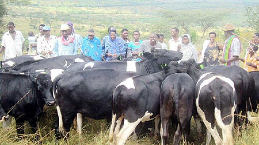 With smiles. Beneficiaries receiving their cows. (Photo: D. Ngabonziza)