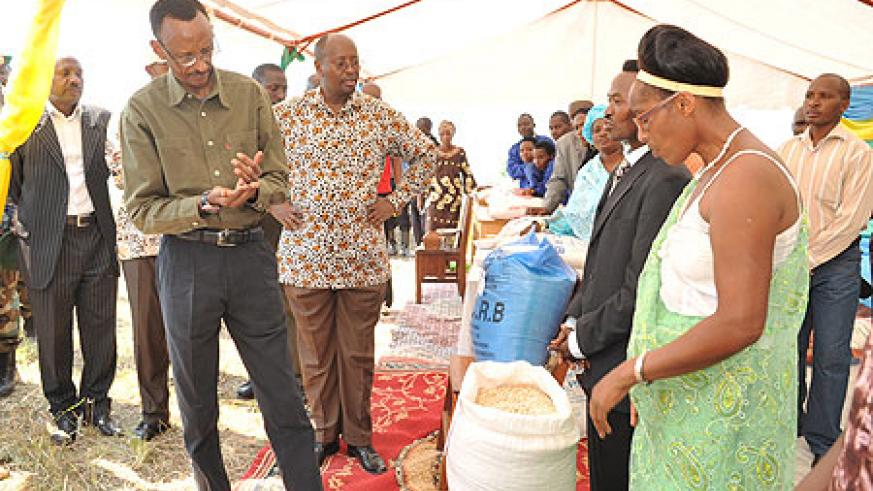 Rice farmers in Bugarama, Rusizi District show President Kagame their produce