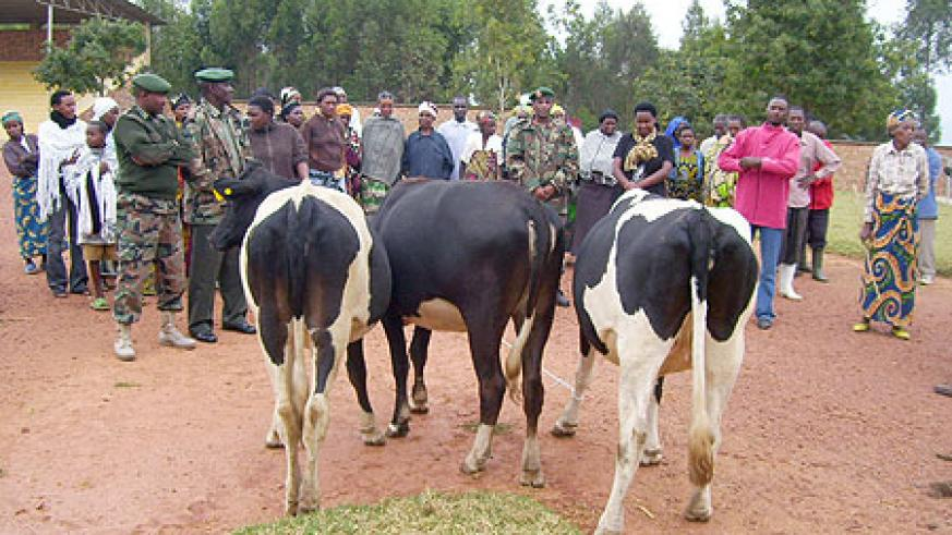Residents admire cows donated to them by RDF on Wednesday. (Photo: A. Gahene)