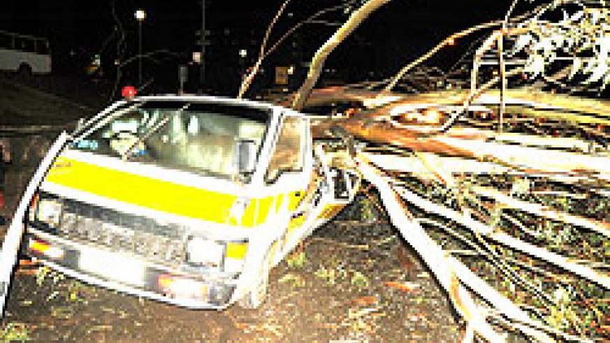 The tree that fell on a passenger van, instantly killed three people.  (Photo: T. Kisambira)