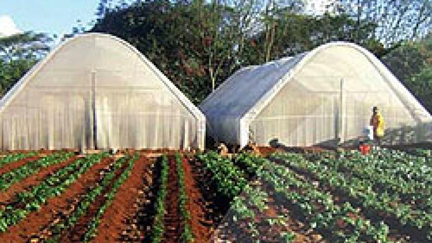 A photo illustrating the a type of greenhouse to be introduced (Courtsey Photo)