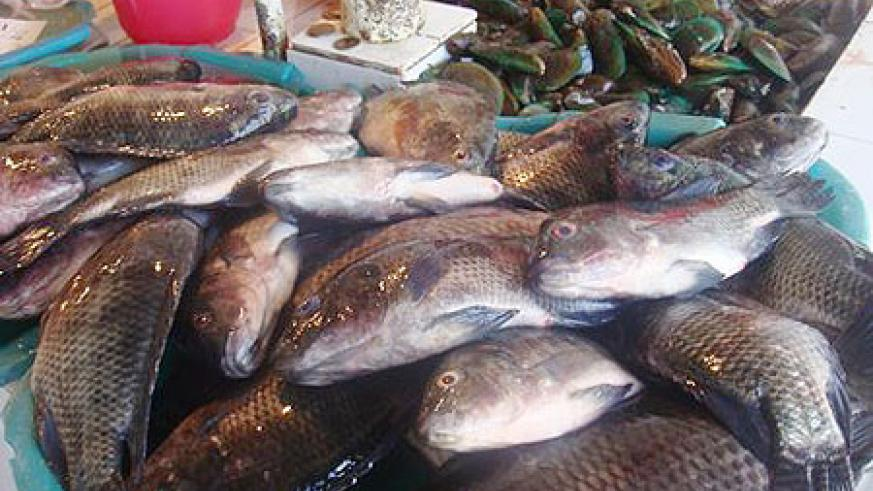 Fish can boost both health and economic patterns. Net photo.