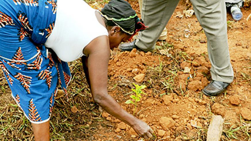 Women and men alike are partaking of the tree planting exercise.