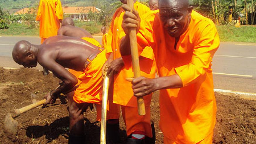 Inmates planting trees yesterday (Photo; S. Rwembeho)
