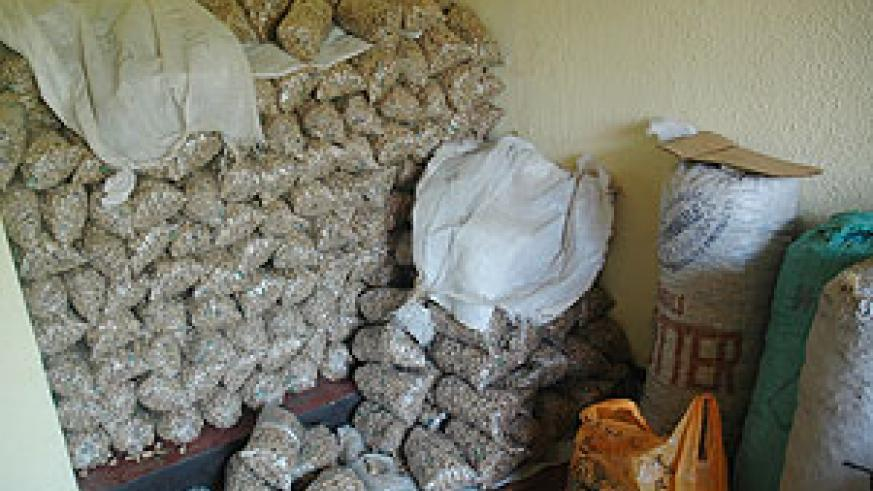 A heap of marijuana impounded by police. More illicit marchandise has been destroyed in Rubavu (File Photo)