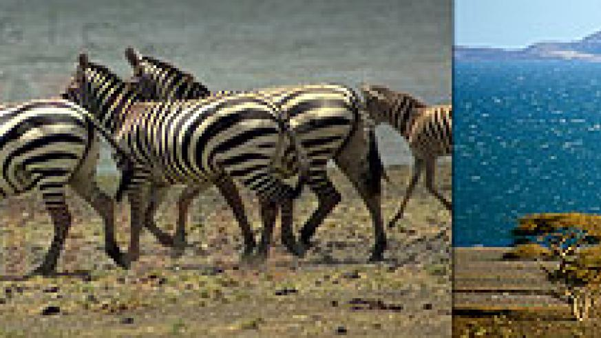 L-R : Zebras at Sibiloi ; Lake Turkana