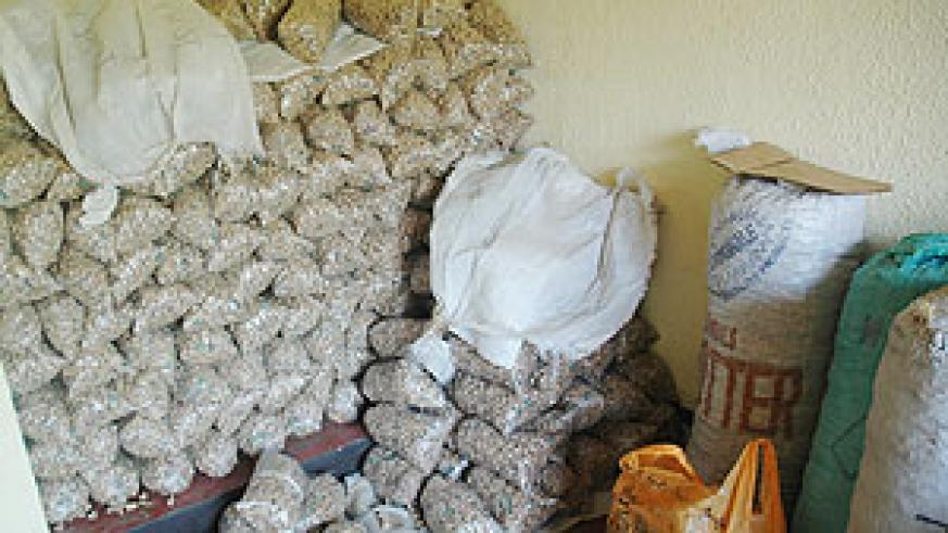 A heap of marijuana impounded this year. Police made over 1,500 arrests over drugs (File Photo)