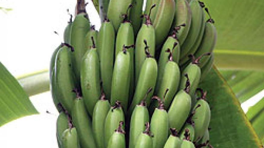 Matooke, agriculture continues to drive Rwanda's economy (Photo. file)