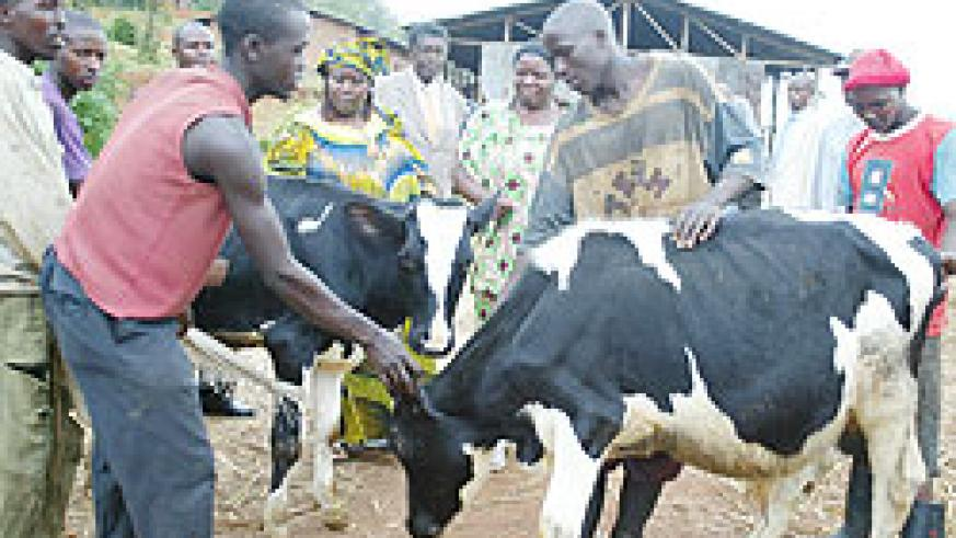 Cows have contributed to wealth creation amongst poor families