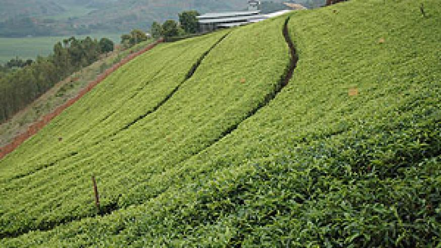 Projects like modern farming will benefit from the changing status of Umurenge Saccos (File Photo)
