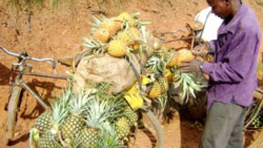 A man transports his pineapple produce. Such traders reap more when reached out by projects like SAF) (file photo)