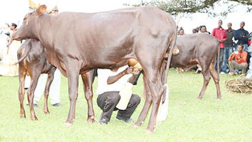Agriculture Minister, Dr. Agnes Kalibata,feeding milk to children at the launch of cultural launch