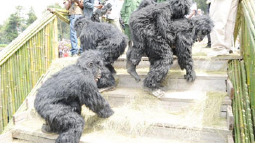 Naming ceremony of baby gorillas last year. (File Photo)